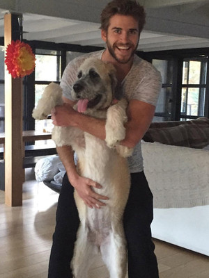 How Miley Cyrus Helped Ex Liam Hemsworth Find a New Dog