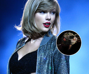 The #TS6IsComing Files: Taylor Swift Exposes Snake Head on Day 3 of Mystery Instagrams