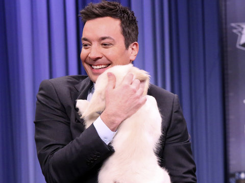 Jimmy Fallon's Puppies Predict This Team Will Win Super Bowl